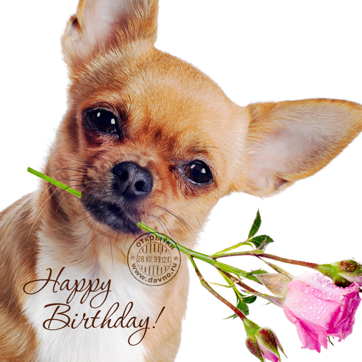 Dogs and Roses: Happy birthday!