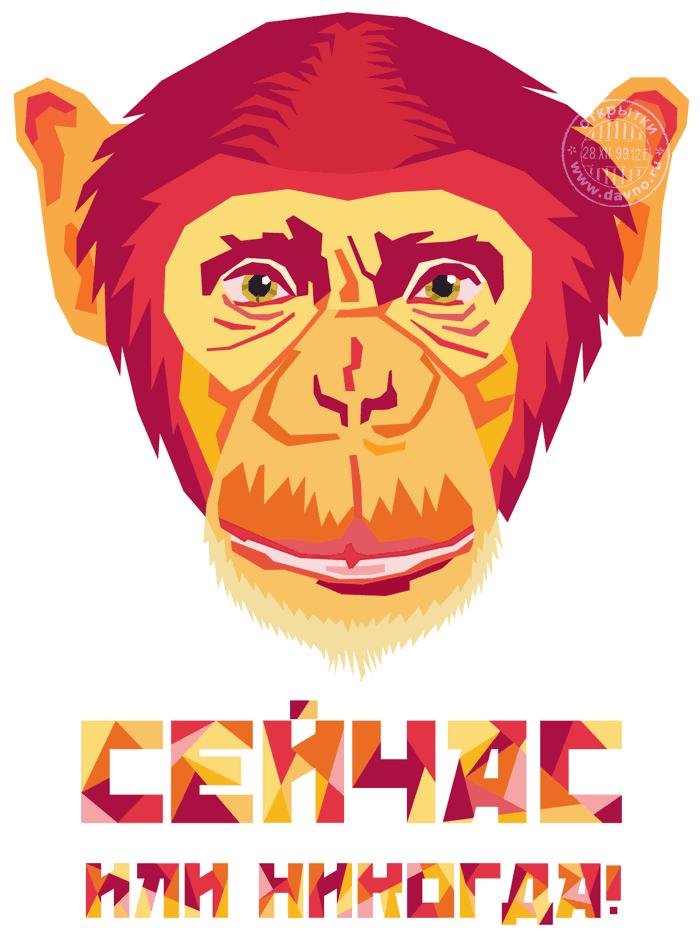 лозунг 2016 года обезьяны - сейчас или никогда!
